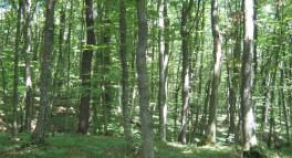 Do 6. srpnja šumoposjednicima uvid u prijedloge Programa gospodarenja