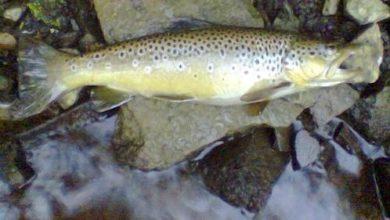 Photo of Veliki pomor ribe na području Žumberka