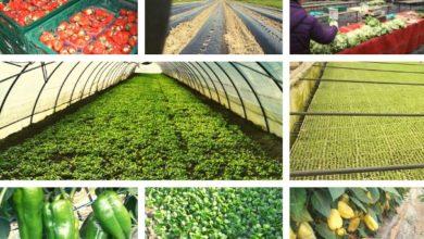 Photo of Proizvođači s jaskanskog područja koji dostavljaju povrće, hranu, vino, …