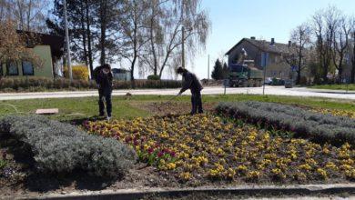 Photo of Ceste Jastrebarsko u proljetnom uređenju grada